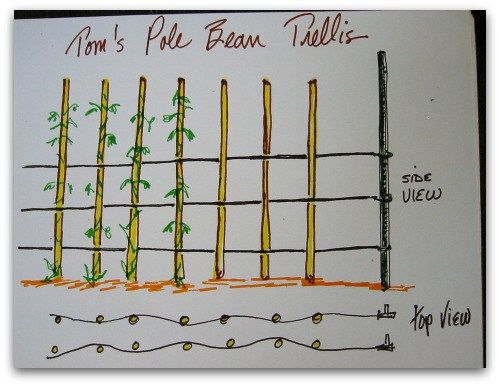the 25 best pole beans trellis ideas on pinterest bean trellis