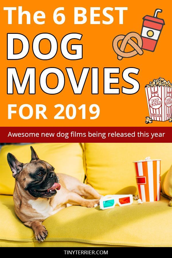 6 Heart Warming New Dog Movies To Watch In 2019 Movies To Watch