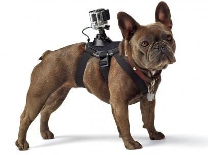 Cinturão Canino Fetch AOGP0012 - GoPro com as melhores condições você encontra no Magazine Voceflavio. Confira!