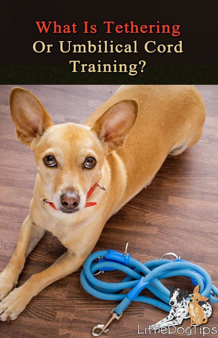 Tethering Or Umbilical Cord Training How Does It Work Little