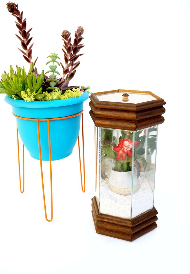 Mid-Century Wood & Glass Terrarium [Succulent + Pot + Gravel Included] || Vintage Modern Hexagonal Tabletop Greenhouse | Mod Desk Garden by ELECTRICmarigold on Etsy