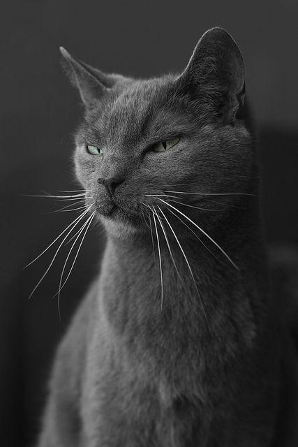 Atelier de Malé (Ouvert 0/2) 7af6d072ed2a34d225293db0dfaf36f3--cat-colors-animal-instinct