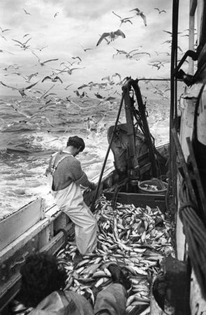 Nick Hedges, Sorting out the catch on deck, 1980, Fishing Industry