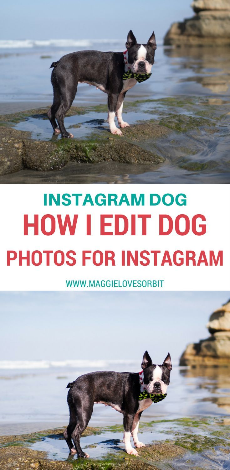 How I Edit My Photos For Instagram Dog Photos Dog Blog Photo
