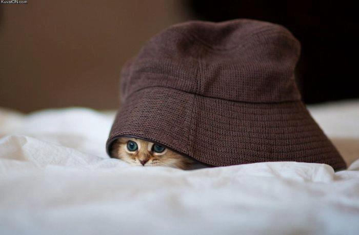 Hats, Hiding Places, Kitty Cat, Peek A Boos, Cute Cat, Daisies, Cutest Kittens, Cute Kittens, Animal