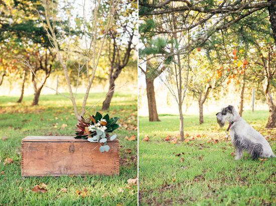 vintage timber crates / fur baby / dog / perth wedding / australian native floral arrangements / outdoor ceremony / core cider house / winter wedding / rustic glamour styling  Rustic Winter Orchard Wedding Inspiration featured on Polka Dot Bride captured by Earthbound Images http://www.earthboundimages.com.au