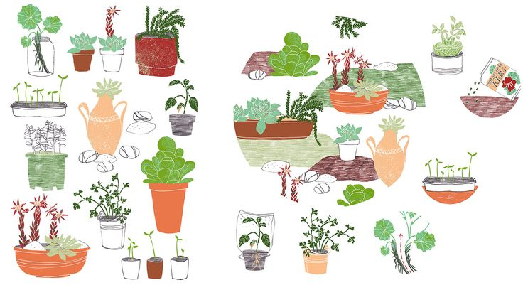 Illustrations for &Katern on succulents and gardening by Kim Welling