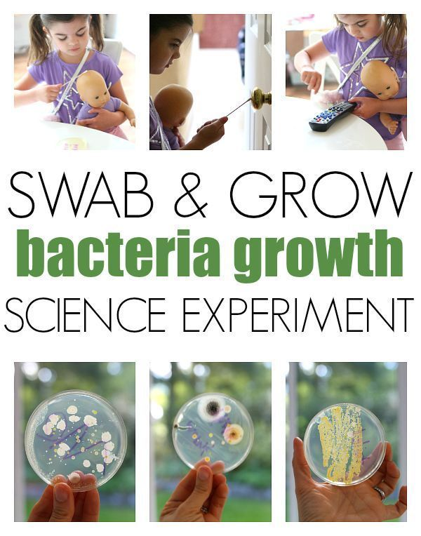 Swab & Grow - Bacteria Growth Experiment | Kids Activities ...