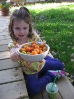 How To Grow Organic Tomatoes - some tips from Eastern Washington