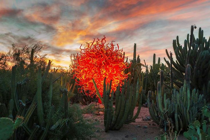 "Dale Chihuly's ""Summer Sun"" Glass Sculpture at The Desert Botanical Gardens in…"