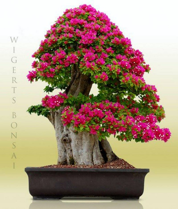 Find This Pin And More On Bonsai With Pink Flowers Beautiful