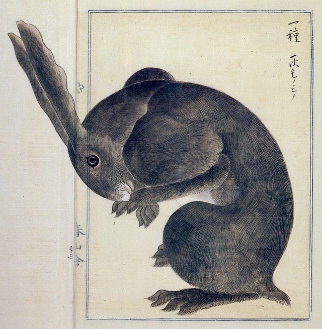 本草図説「アナウサギ」 高木春山 江戸時代