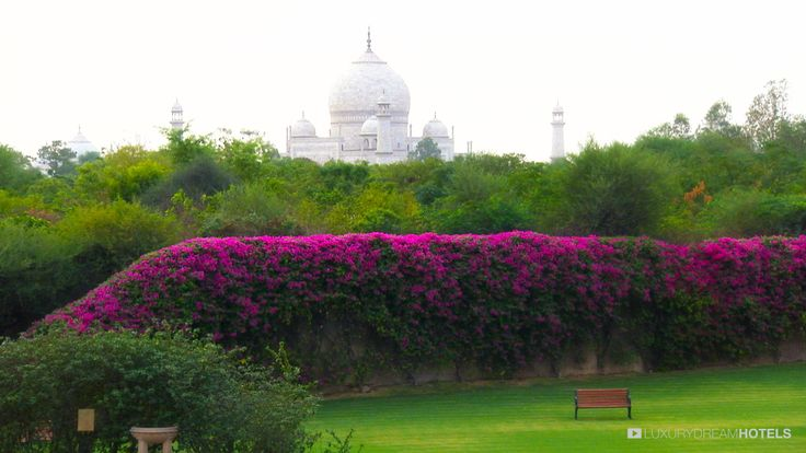 Oberoi Amarvillas Most visitors to Agra are here for one reason only to see the Taj Mahal. Where better to stay, then, than Amarvilas, where every room has a spectacular view of the Taj, just six hundred meters away? #luxuryhotel #hotel Oberoi Amarvillas - India
