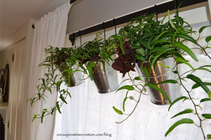 17 Best Ideas About Window Plants On Pinterest Apartment Plants Indoor House Plants And Good