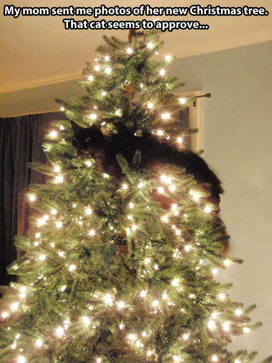 We've NEVER had a orob with cats n trees ... the 'boot' is verrry effective lol lol