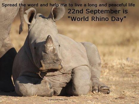 """""""Please spread the word by sharing this picture with your friends"""" - 22nd September is World Rhino Day - Help save our Wildlife treasure. We owe it to our children"""