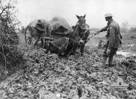 19 October 1917. Western Front (Belgium), Ypres Area, Potijze. A typical illustration of the difficulties encountered in the Ypres Sector in Belgium, in transporting supplies to the forward areas. A mule team is seen here trying to get out of the mud on a track near Potijze Farm. Note the mule on the left is knee deep in mud.     Australian War Memorial, Canberra (Australia).