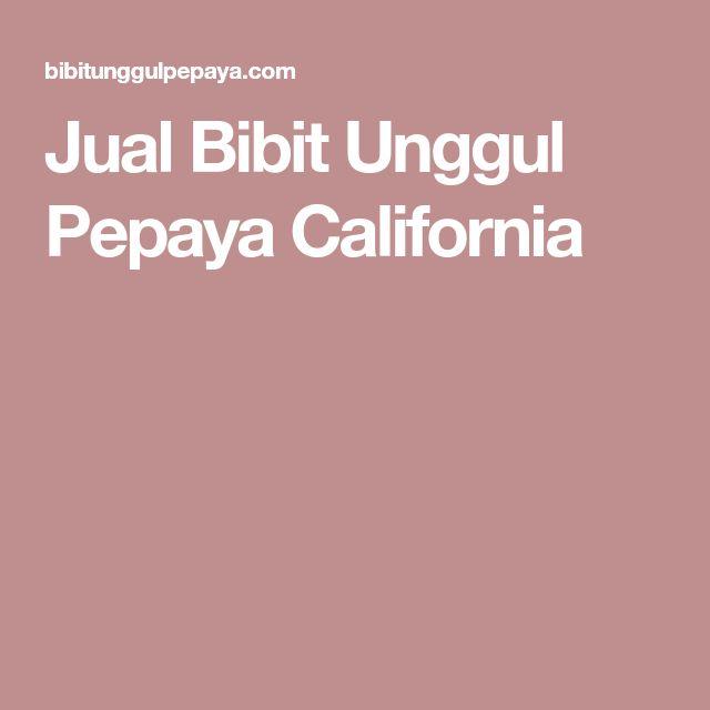 Jual Bibit Unggul Pepaya California