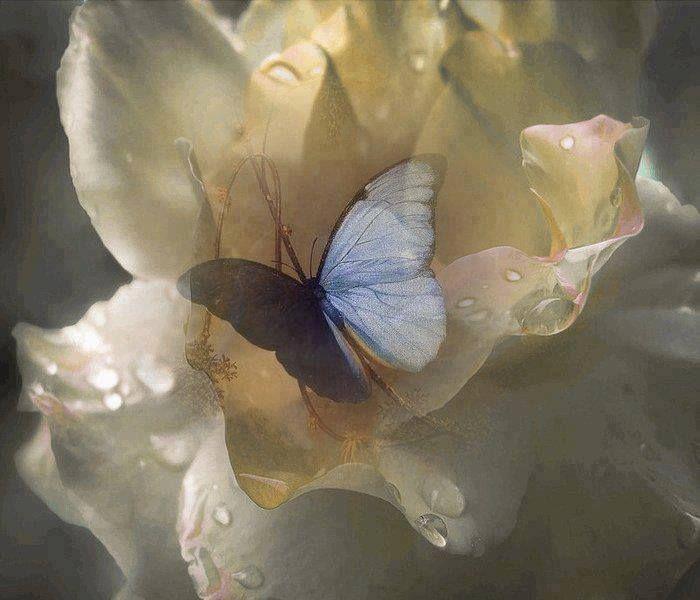 Бабочки гиф открытка
