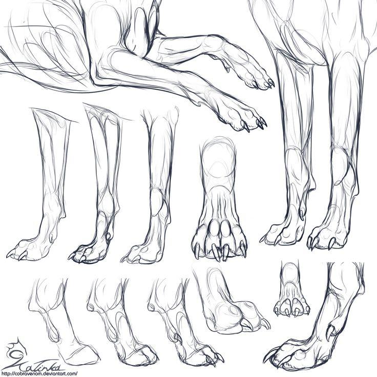Study: Canine forepaws by CobraVenom.deviantart.com on @deviantART