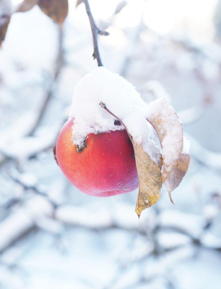 Winter apple for the birds.