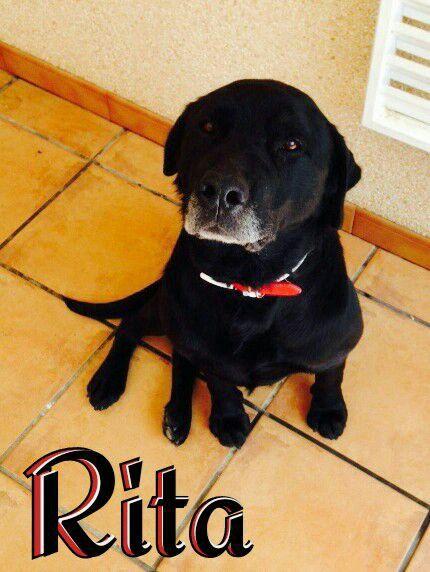 Nombre: Rita/ Raza: Labrador/ Edad: Mayo 2006/ Sexo: Hembra.