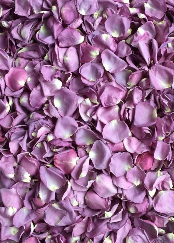 Freeze Dried Rose Petals In Lavender