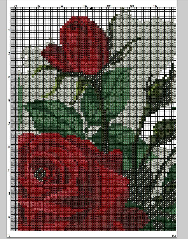 róże 8