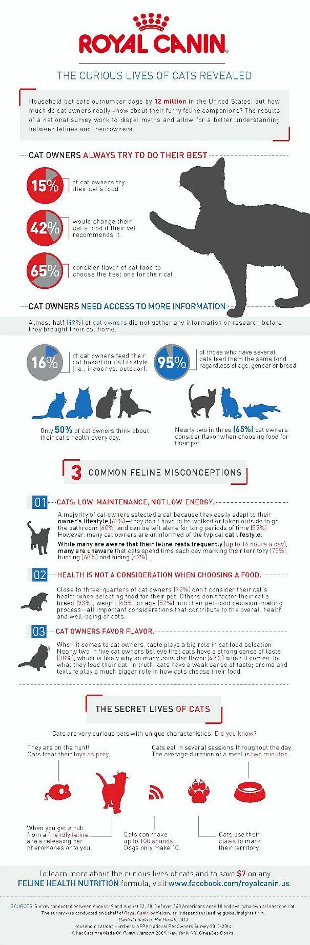 Curious Cat Infographic Royal Canin #curiouscat #sponsored