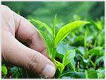 dermaRiché - The 7 Best Ringworm Cures
