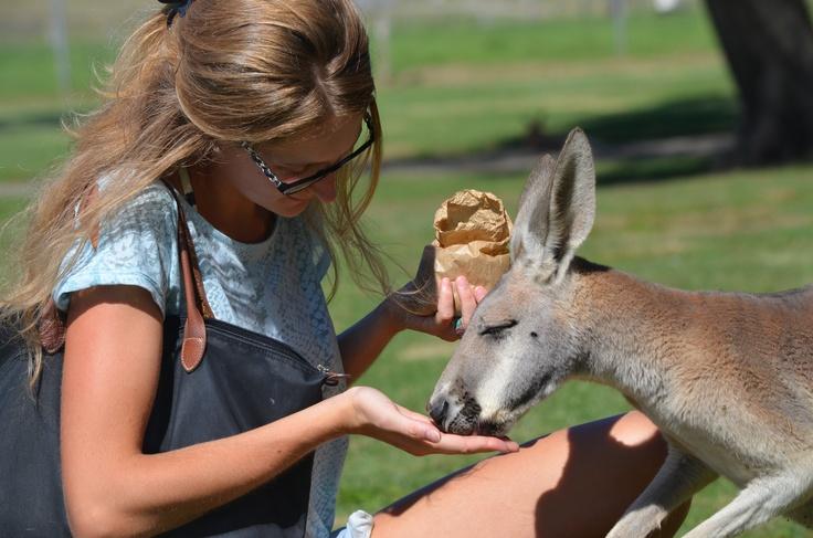 Because you can feed a kangaroo ! @Oakvale farm, Salt Ash