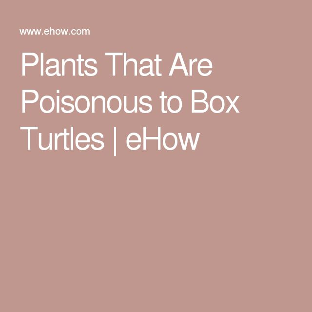 Plants That Are Poisonous to Box Turtles | eHow                                                                                                                                                                                 More