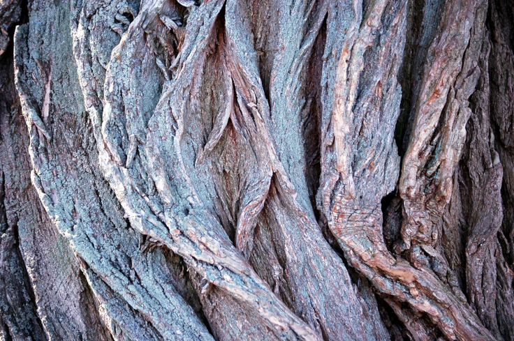 Willow bark #trees #nature