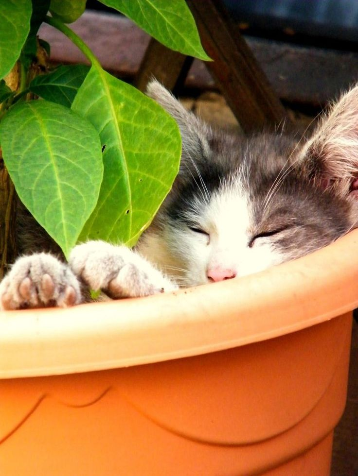 1000 Images About Cats Cats In Flower Pots On Pinterest