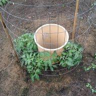 Pladtikeimer nit Löchern zum bewässern von Tomaten