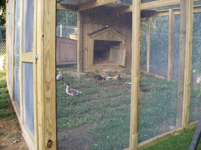 Need Duck Coop Ideas