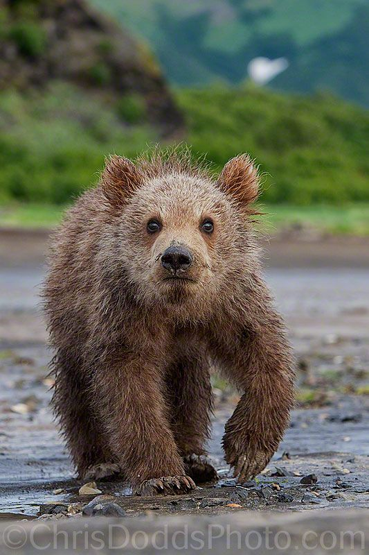 Cub of HEARTS by Christopher Dodds, via 500px