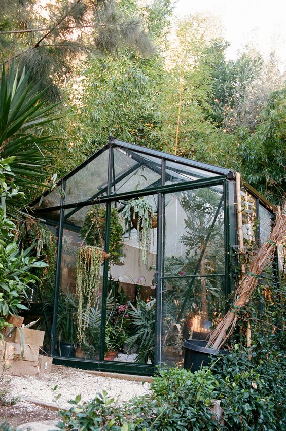 one of lauri kranz's greenhouses in the hollywood hills   via the blue hour (brian ferry)  via edible gardens la