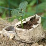 Easy, Organic Compost Recipes