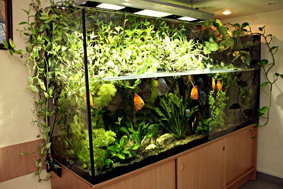 Love the plants above and below of course.  Wish I had done this with the brackish tanks I kept.