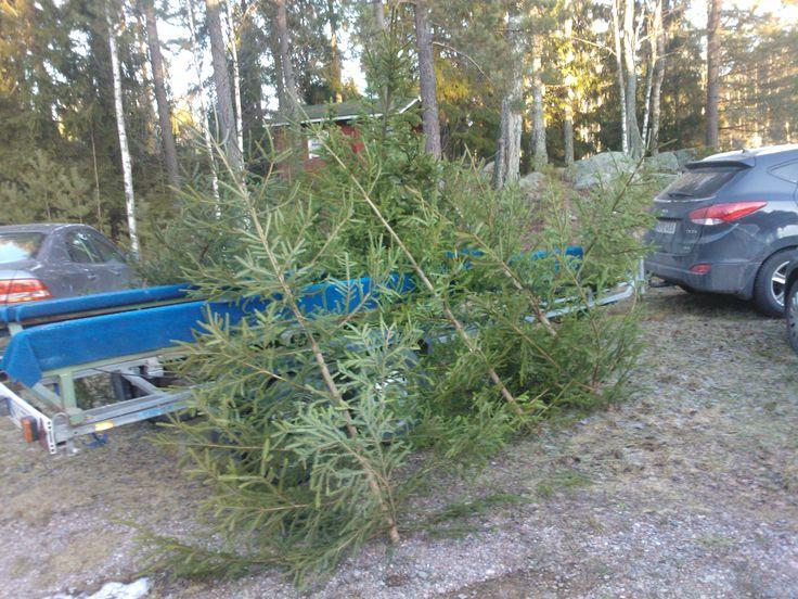 Julgranar på Kabböle julmarknad 2014. Finns där också 2015