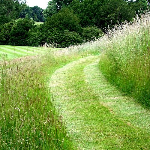 Instead of mowing large areas of grass, sow a meadow and mow paths. More inviting to you and to wildlife.
