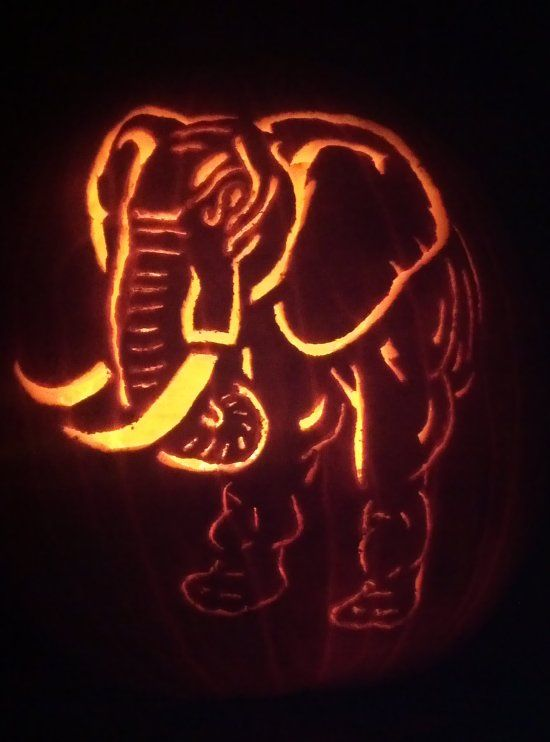 17 best images about crimson tide halloween on pinterest for How to carve an elephant on a pumpkin