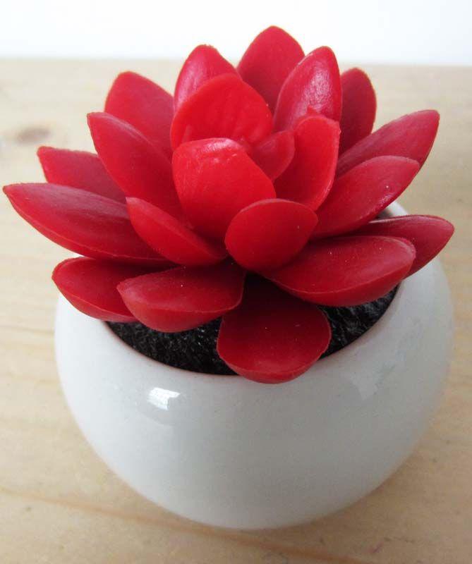 A beautiful Red Succulent