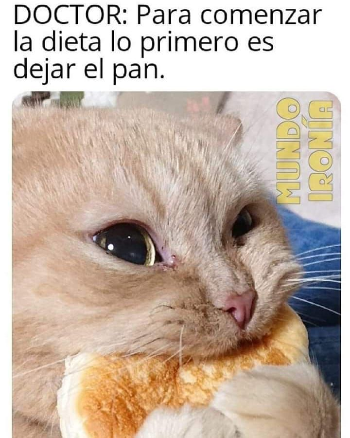 The Cutest Cat Breeds In 2019 Memes Graciosos De Animales Memes De Perros Chistosos Memes Divertidos
