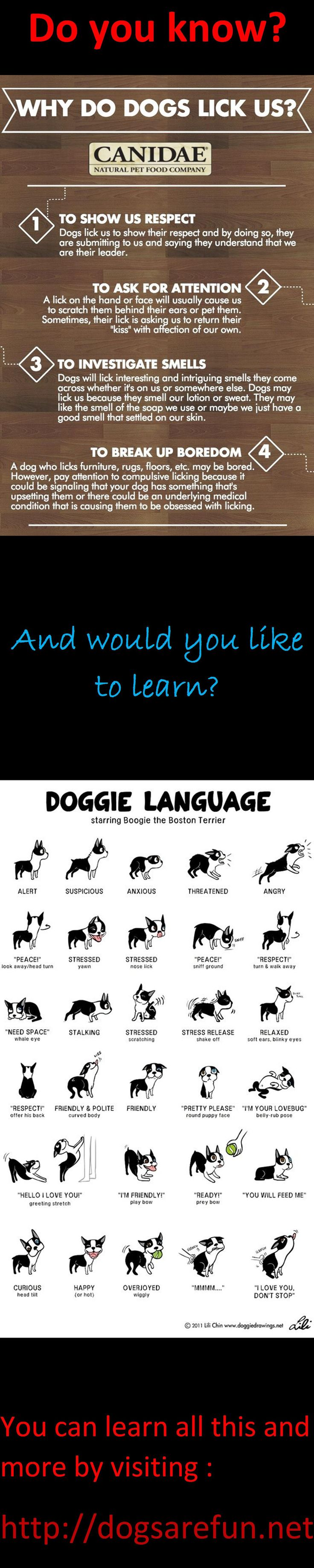 Everything you every wanted to know about your dog #dogtraining #doggrooming