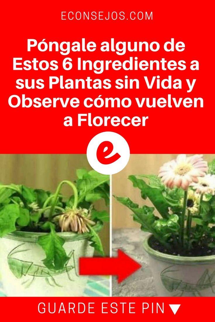 Con Estos 6 Ingredientes Tus Plantas Sin Vida Volverán A Florecer Abono Natural Para Plantas Insecticida Natural Para Plantas Abonos Para Plantas