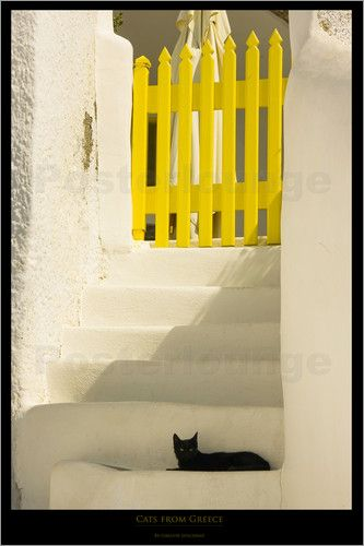 schwarze Katze Bilder: Poster von Gregor Luschnat bei Posterlounge.de