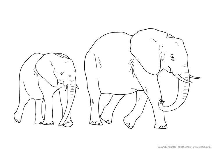 Kostenlose Zeichnungen von Tieren - Poster Bilder & PDF