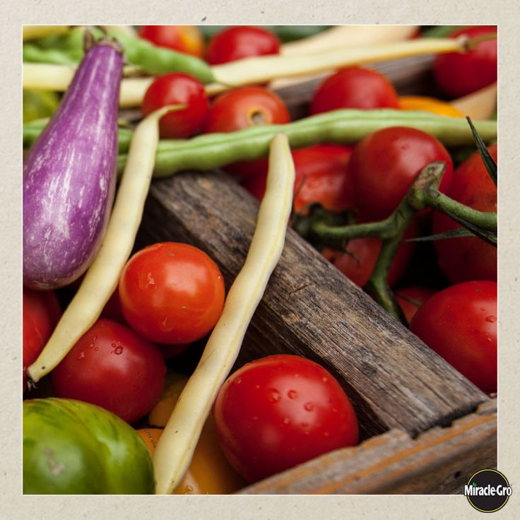 17 Best Images About Regrow Veggies On Pinterest: 17 Best Images About Best Vegetable Health Benefits On